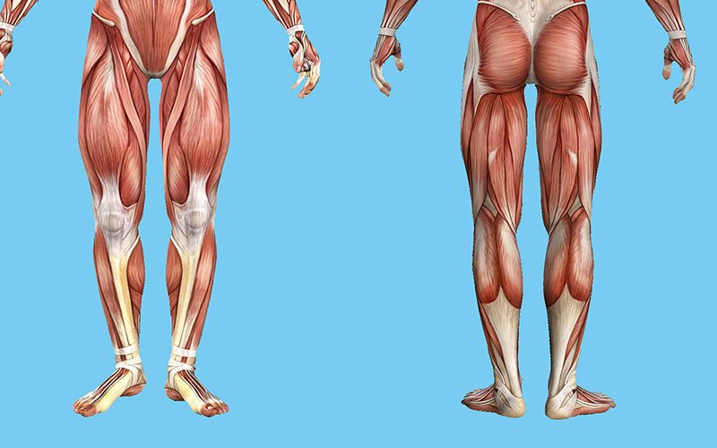 Best Exercises to Fix Leg Muscle Imbalance without Weights