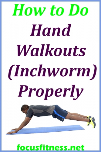 In this article, you will discover how to perform hand walkouts or inchworm exercise for a strong upper body #hand #walkouts #inchworm #focusfitness