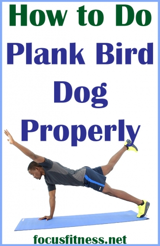 If you want to strengthen your core and shoulders, this article will show you how to perform the plank bird dog exercise properly #plank #bird #dog #exercise #focusfitness